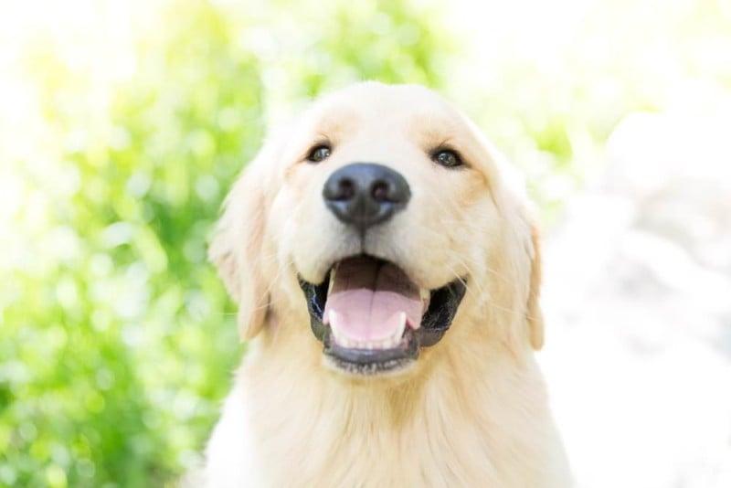 11 Tipps zum Fotografieren Ihres Hundes oder Ihrer Katze Wie ein Pro
