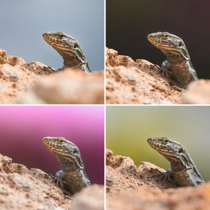 Machen Sie einen Hintergrund-Check, wenn Sie ein Wildlife Photo
