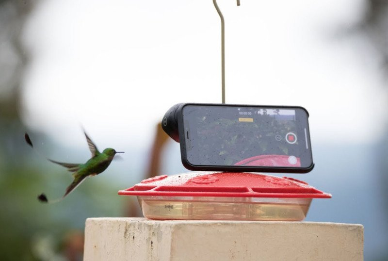 This Slow-Motion Hummingbird Video Was Shot on the iPhone