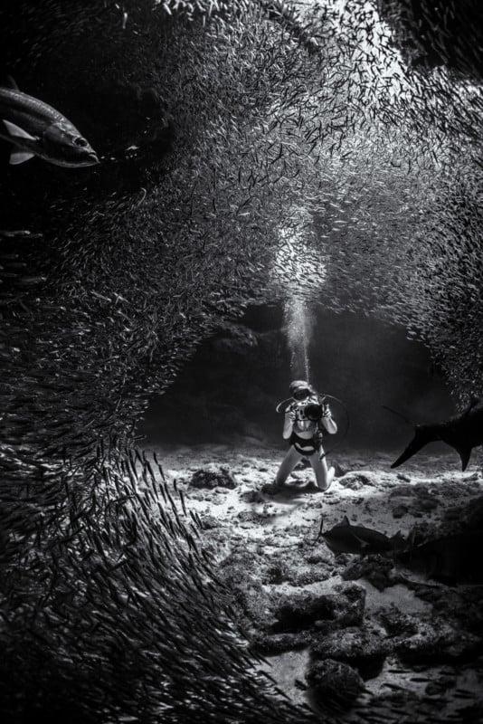 Les photos gagnantes du photographe sous-marin de l'année 2019 602KenKiefer-534x800