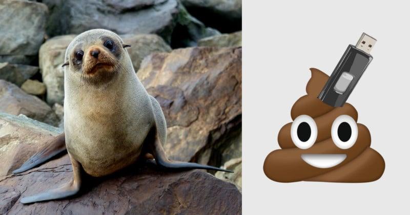 Photos Found on USB Stick Found in Frozen Seal Poo
