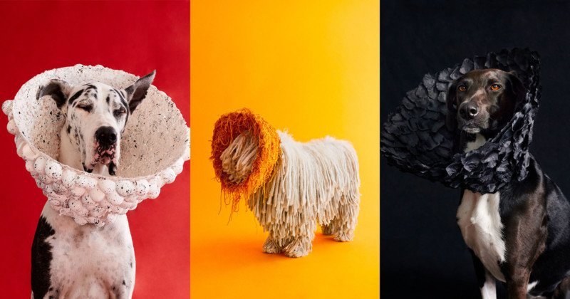 Photos of Dogs Wearing Custom Cones of Shame