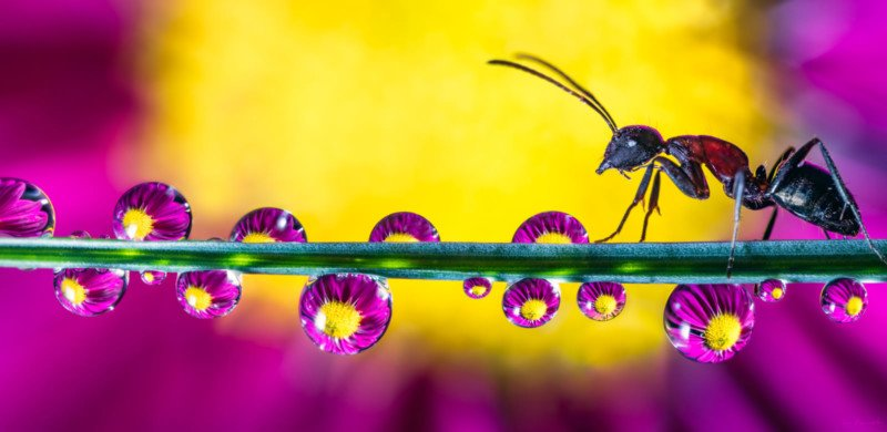 Shooting Water Droplet Refractions for Magical Macro Photos