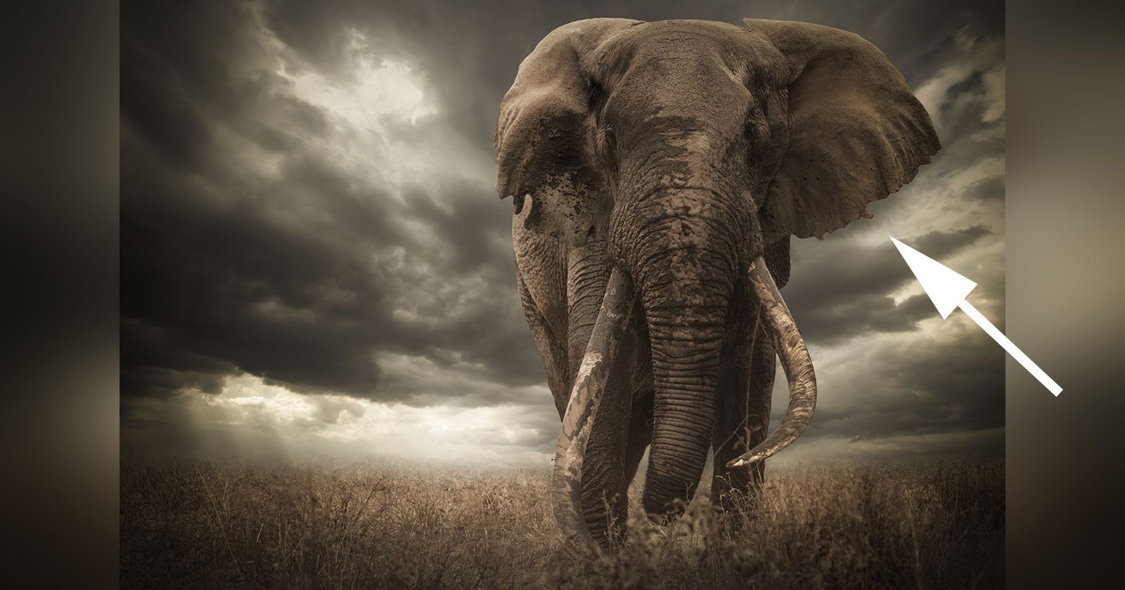 Wildlife Photo Contest Winner Disqualified Over Elephant's Ears