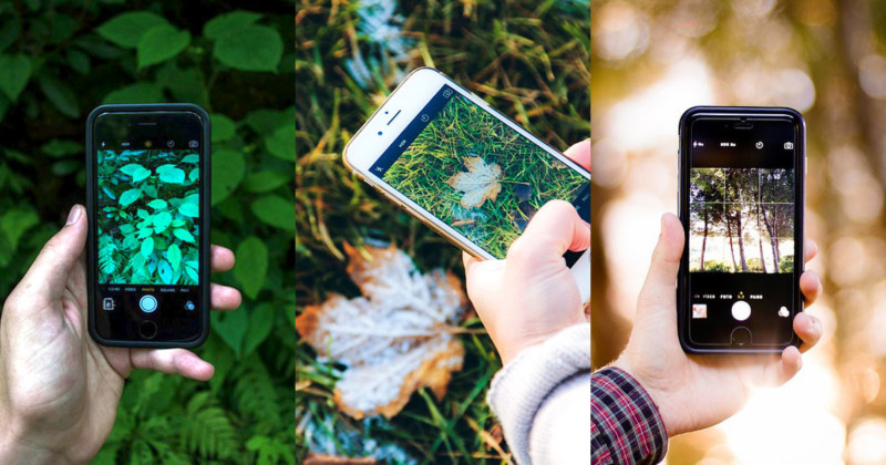 This Free 'Shazam for Nature' App Can Identify Plants and Animals in