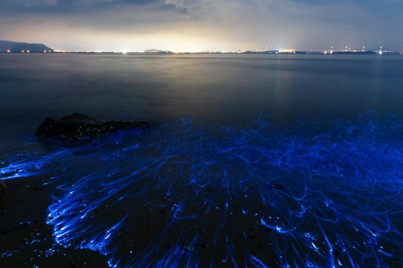Macro Video of Bioluminescent