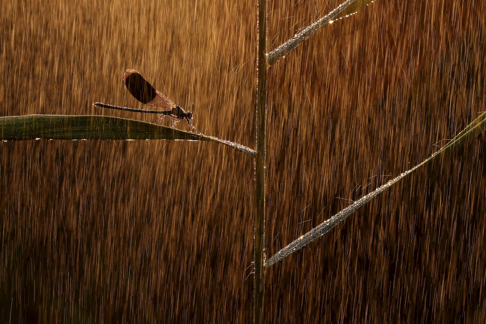 Thỏ nhảy là bức hình đoạt giải nhất Cuộc thi nhiếp ảnh Thiên nhiên hoang dã 2019 - Ảnh 6.