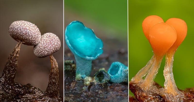 Stunning Super Macro Photos of Minuscule Mushrooms and Fungi