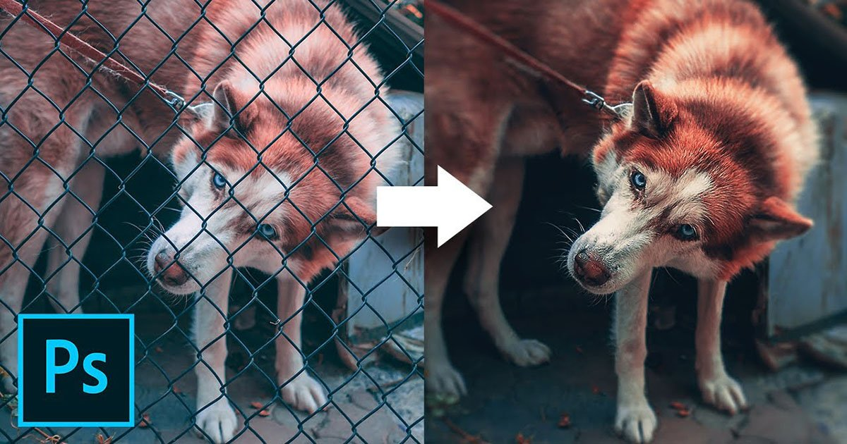 How to Remove a Chain-Link Fence in Photoshop in 3 Easy Steps