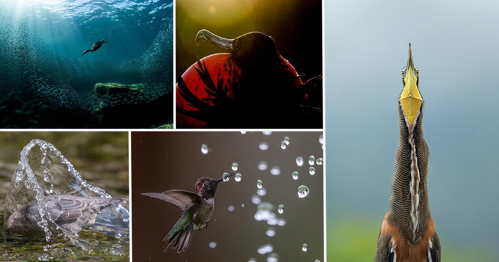 BIRDS & PARROTS🦜 🦜 - cover