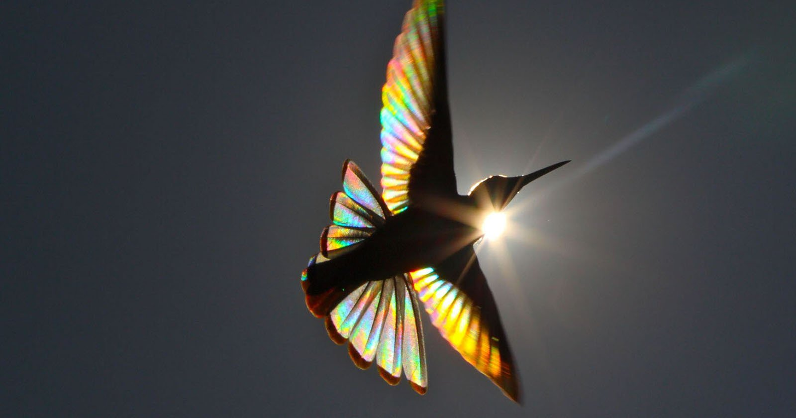 Photographer Captures the Rainbows in Hummingbird Wings