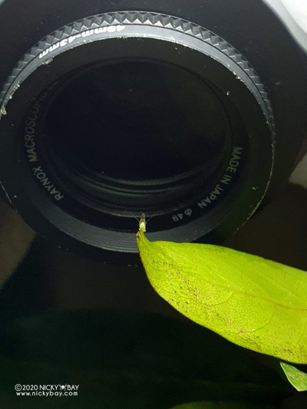 The Laowa 50mm f/2.8 Macro for M4/3 is Small and Sharp 29
