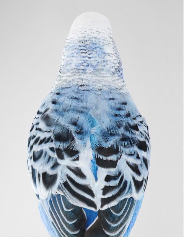 Portraits of Birds Photographed like Humans 17
