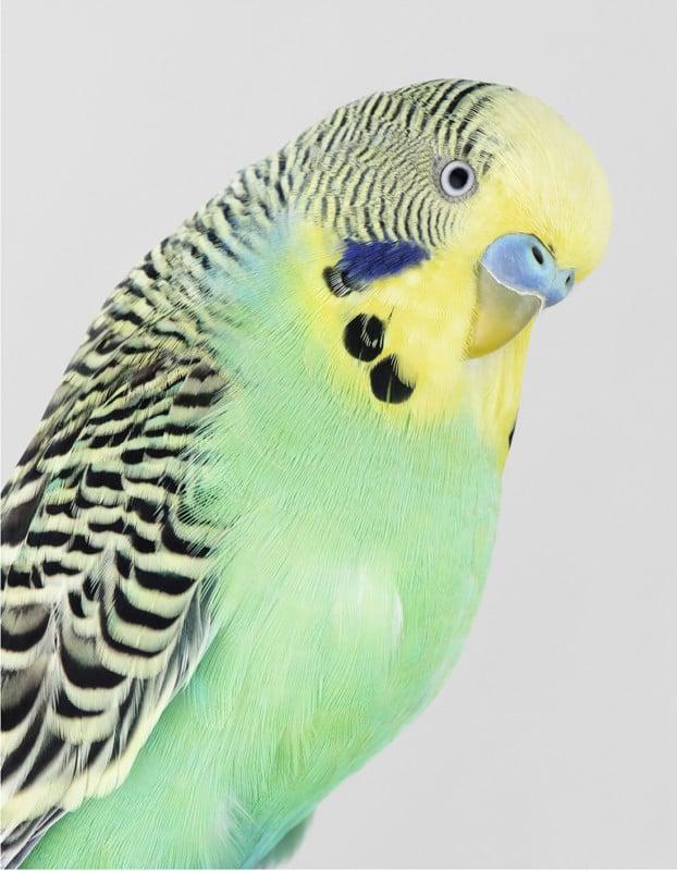 Portraits of Birds Photographed like Humans 13