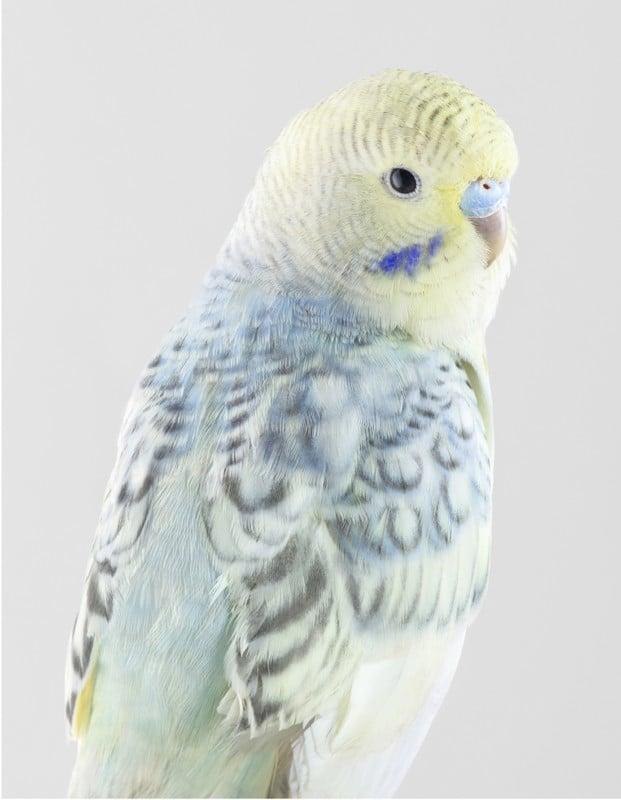 Portraits of Birds Photographed like Humans 10