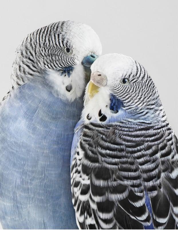 Portraits of Birds Photographed like Humans 15