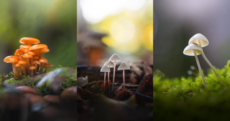 10 Tips for Photographing Little Mushrooms in the Forest