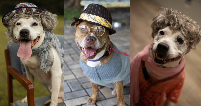 Animal Shelter Photographs Older Dogs Dressed as Senior Citizens to Encourage Adoption