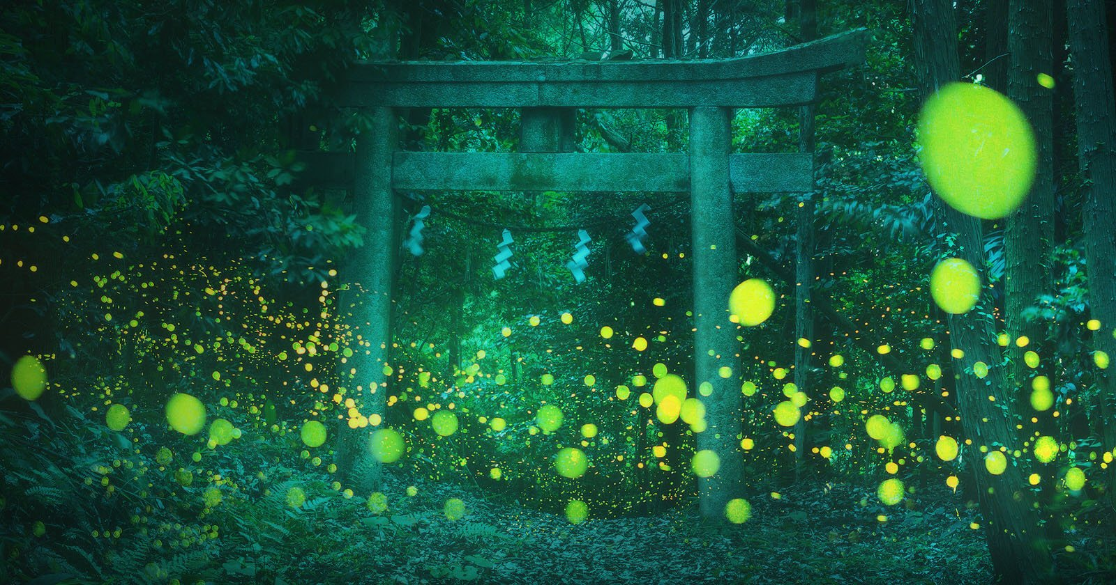 These Photos of Fireflies in Japan are Magical