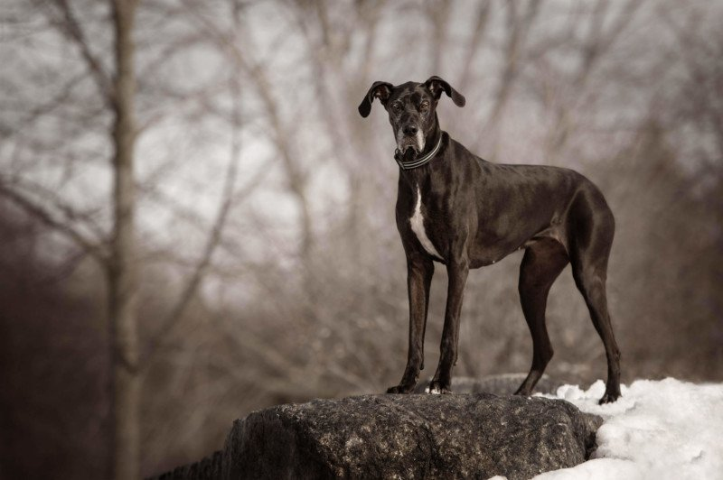 Gorgeous Photo Series Features Often Ignored Dark-Colored Pets 42