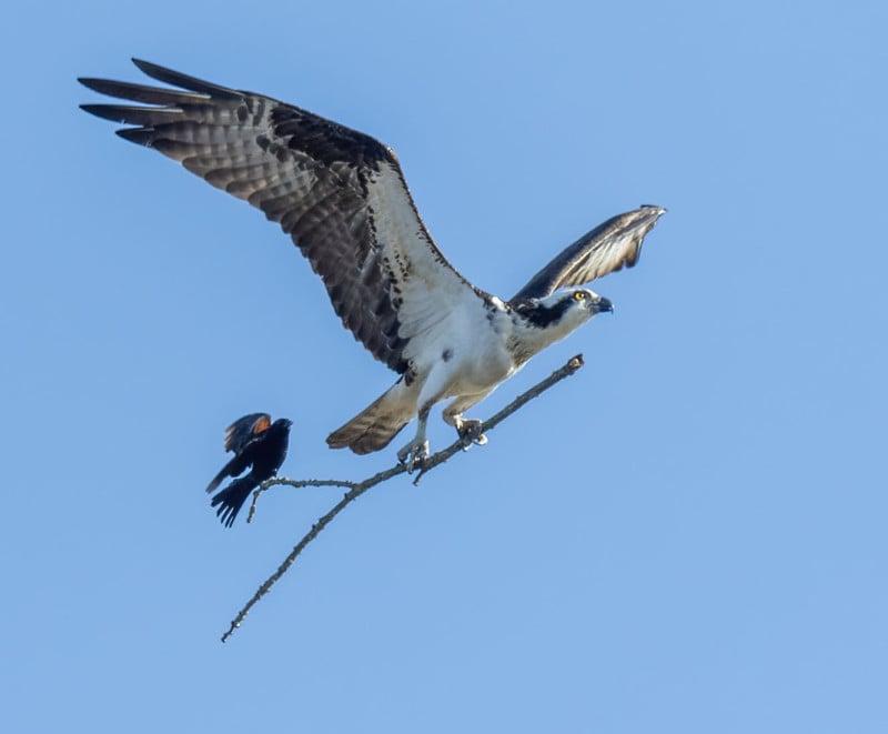 birdride-800x661.jpg