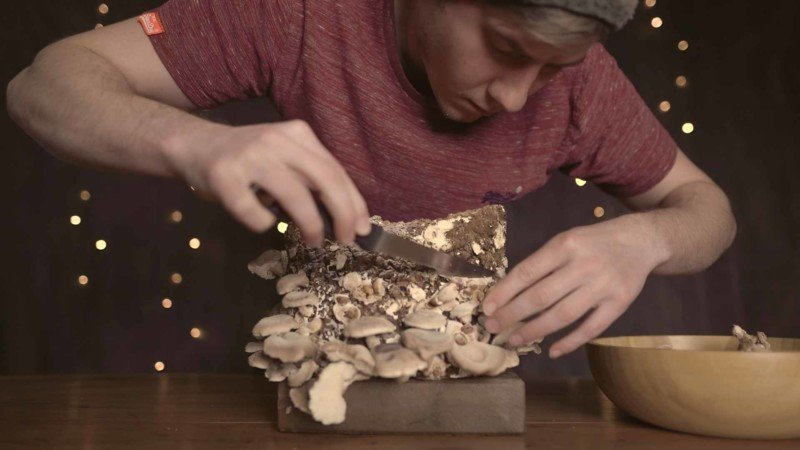 Timelapse Shows Enthralling Process of a Growing Shiitake Mushroom 24