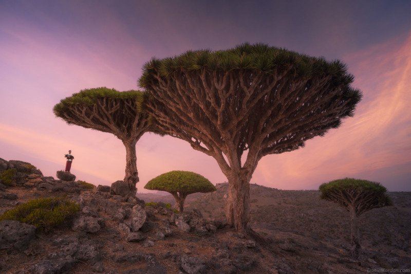 Gorgeous Photos of Socotra, The 'Most Alien-Looking Place on Earth' 17
