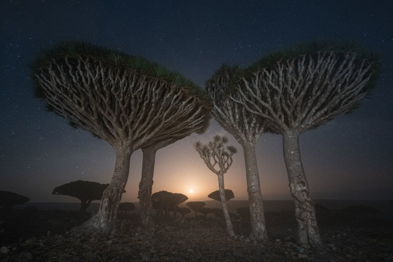 Gorgeous Photos of Socotra, The 'Most Alien-Looking Place on Earth' 25