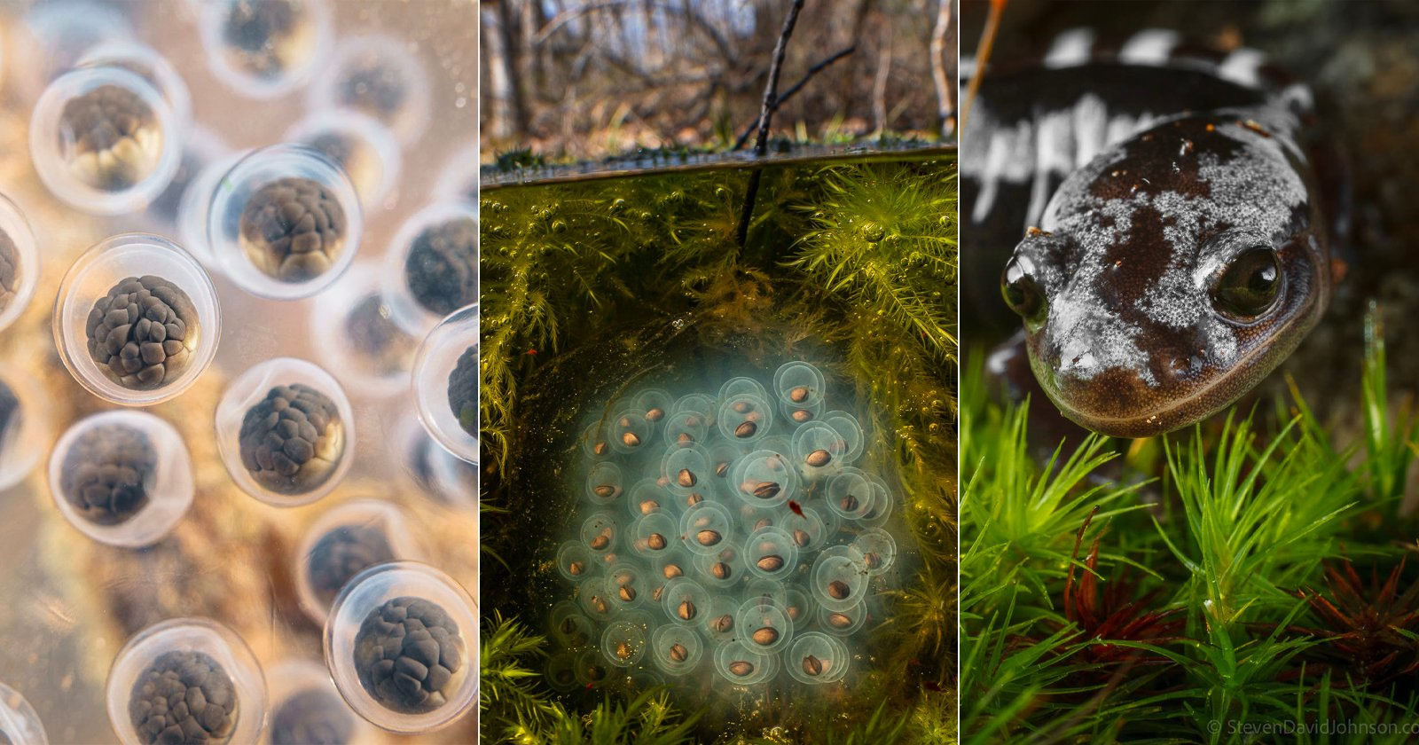 Stunning Macro Photos Shot Within the Unique World of Vernal Pools