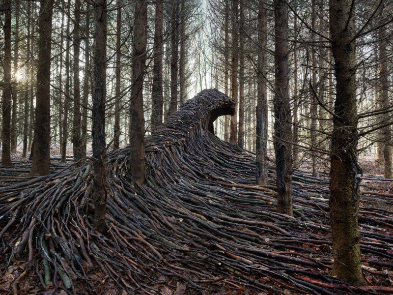 Photographer Creates Giant Waves of Wood in a Forest