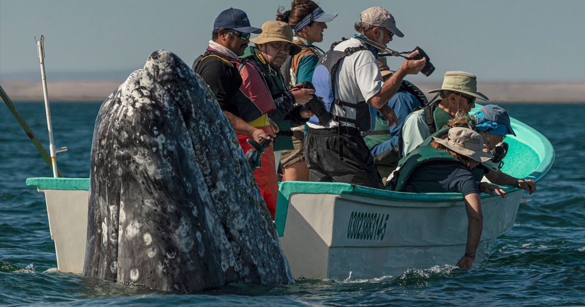 Photographer Spots Sneaky Whale Next to Unsuspecting Whale Watchers