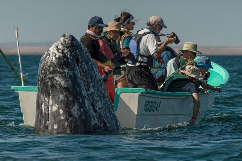 Photographer Spots Sneaky Whale Next to Unsuspecting Whale Watchers 1