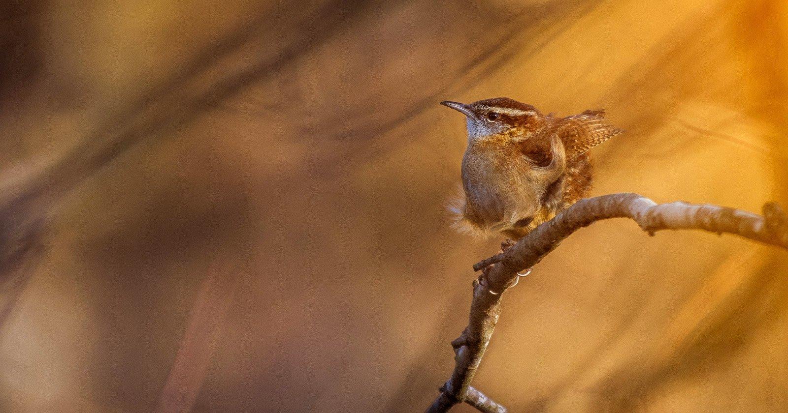 Un tutorial completo e dettagliato su come fotografare uccelli e animali selvatici