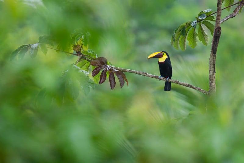 Tips - consejos para obtener excelentes fotografías de naturaleza