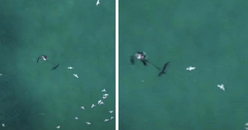 Drone Pilot Spots and Saves Man Being Attacked by Shark