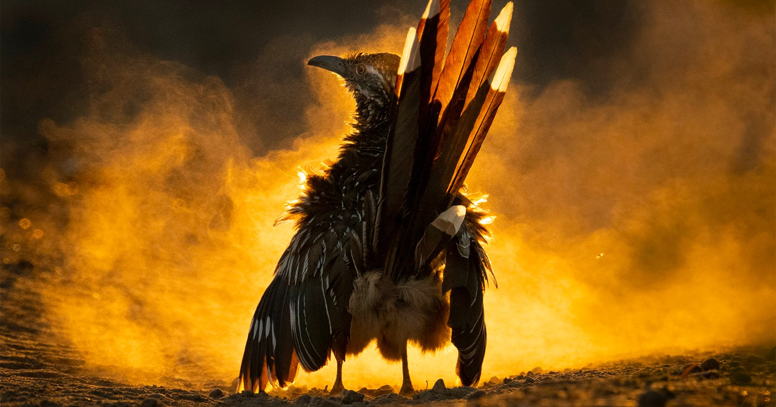 Dusty Roadrunner Photo vince gli Audubon Photography Awards 2021