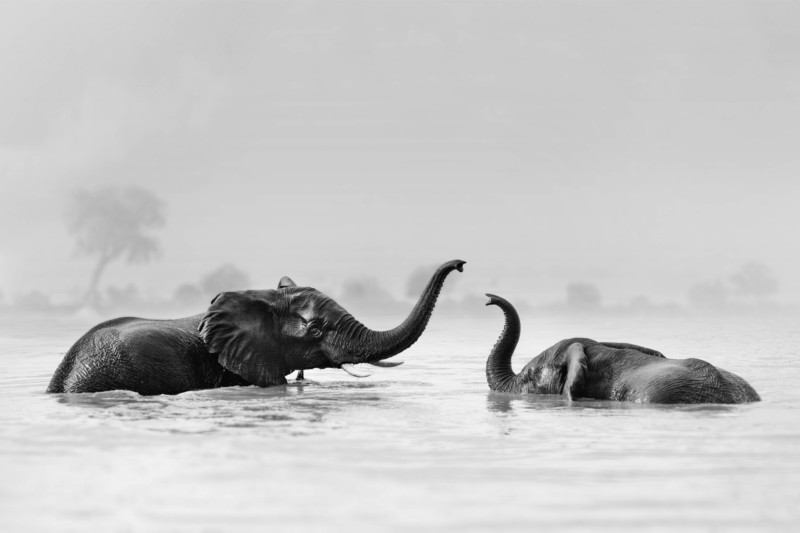 International Photographers Unite to Raise Funds to Benefit African Wildlife 3
