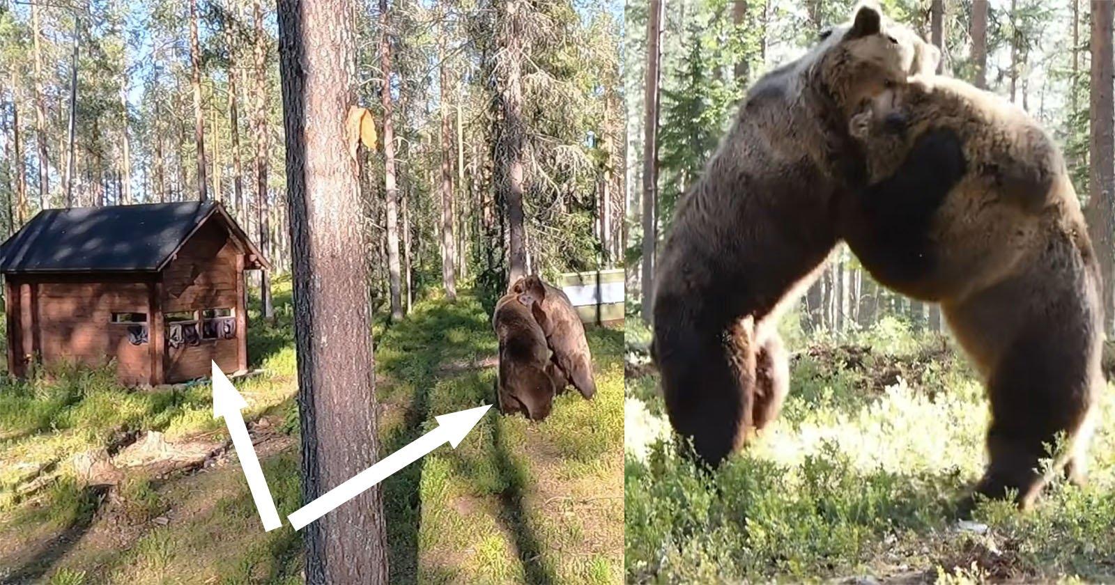 L'epico scontro con l'orso va a pochi passi dalla troupe televisiva