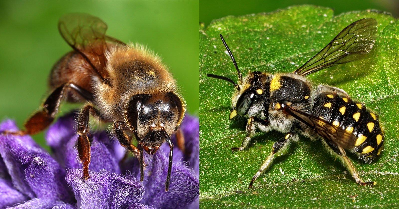 Un portfolio di api: i nostri utili insetti