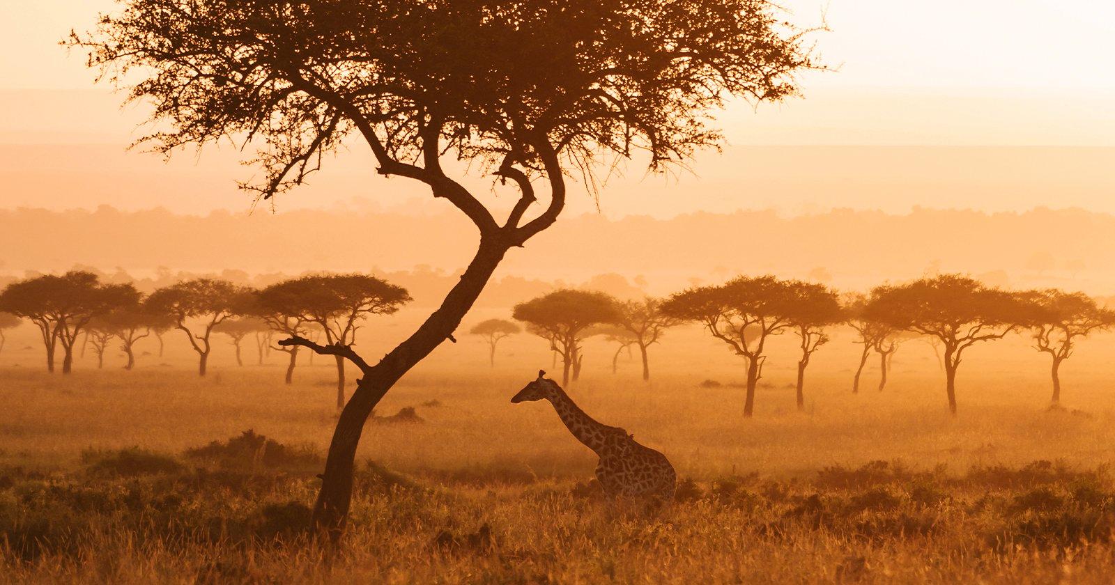 Fotografi internazionali si uniscono per raccogliere fondi a beneficio della fauna selvatica africana