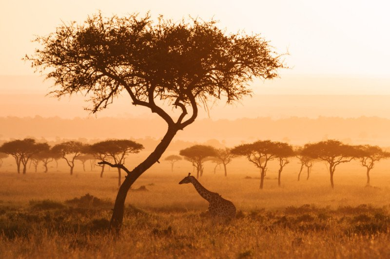 International Photographers Unite to Raise Funds to Benefit African Wildlife