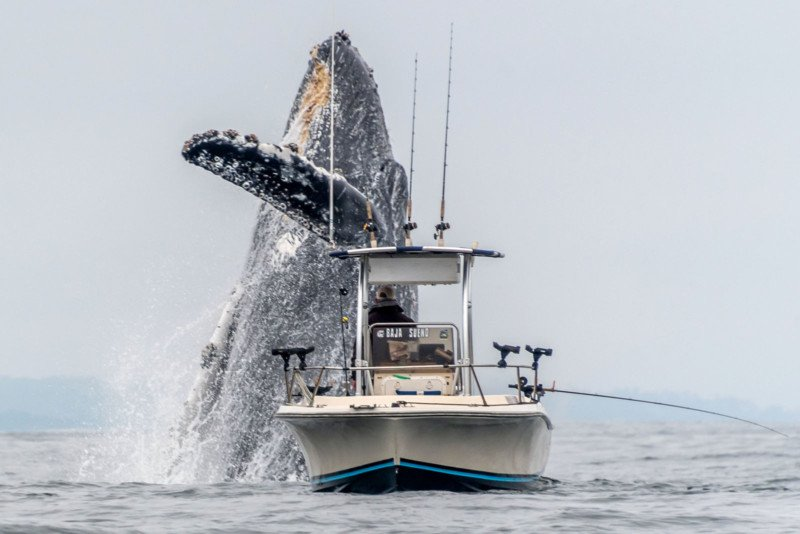 Photographer Catches Whale Breaching Next to a Fishing Boat
