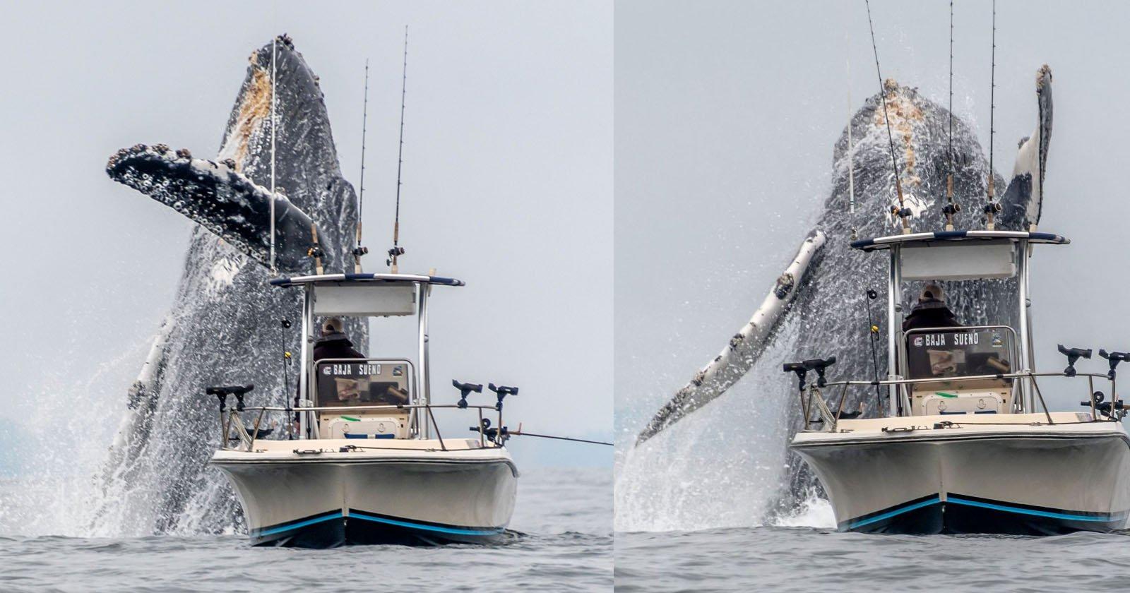 Fotografo cattura una balena che sfonda vicino a una barca da pesca