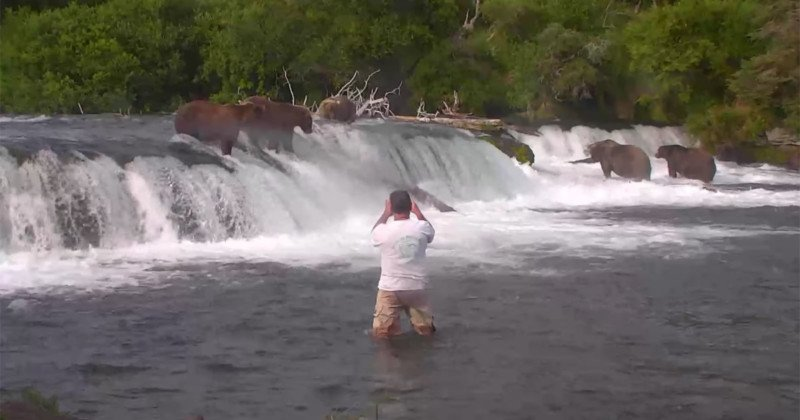 Man Busted Getting Into Water with Grizzlies for Photos 12