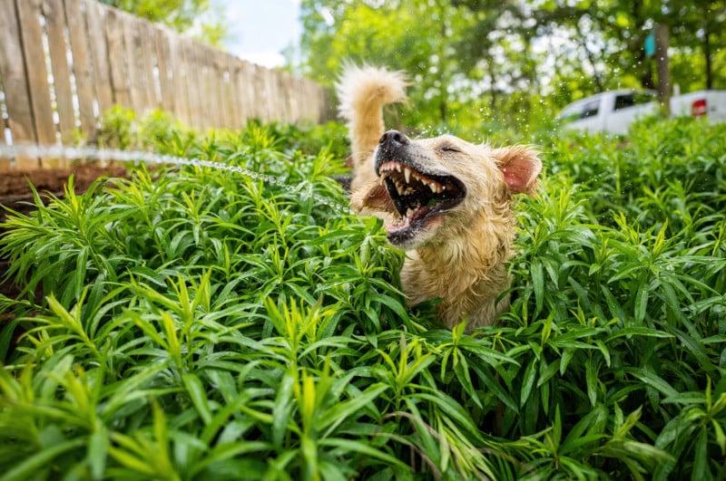 Comedy pet photo 3