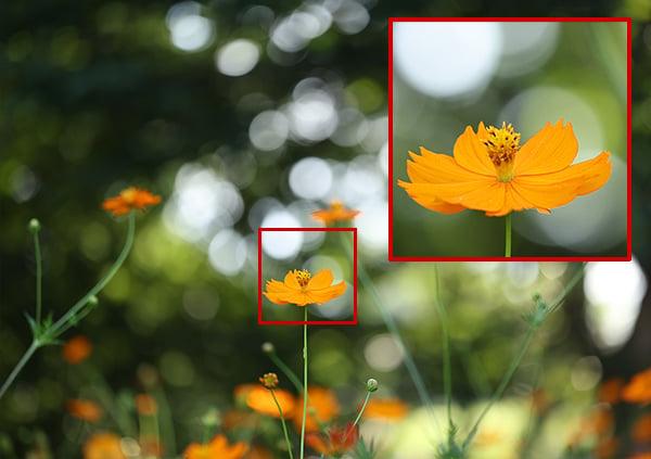 How Aspherical Lenses Fix Aberrations and Improve Sharpness 11